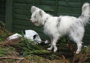 That compost could do with being spread a bit more