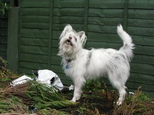 Oh, hello. Good Lord no. Hadn't crossed my mind.