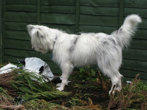 but how best to do it ?