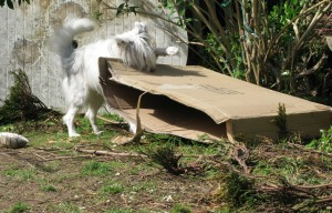 or lift it up and dot it one ...