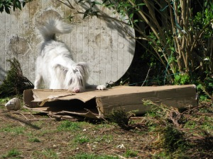 but perhaps I'll just go for its throat.