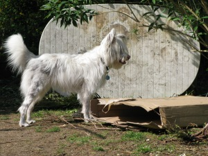 I think it's a present. But what am I supposed to do with it?