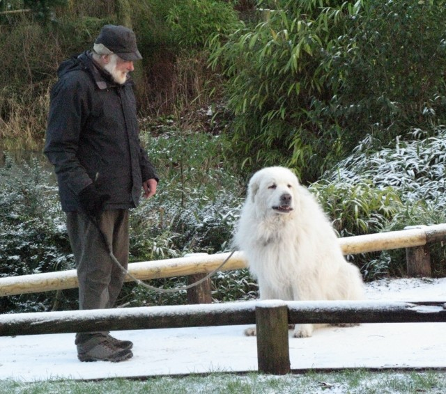 Pyrenean Mountain dogs expect this kind of thing of course, and remain very calm. Pyrenean Mountain dogs expect such phenomena and remain calm and collected.
